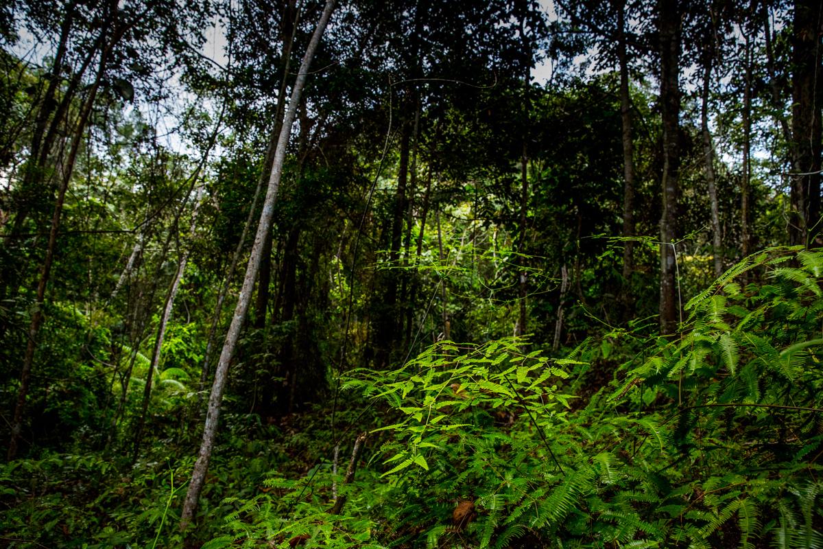 Sumatras Urwald